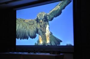 """Der Film """"Adlerflüsterer"""" wird in einer Kurzversion vorgestellt."""